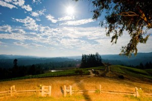 The view at Peay Vineyards (Courtesy: Peay Vineyards).