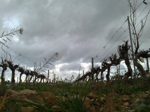 Cazes - vineyard with clouds