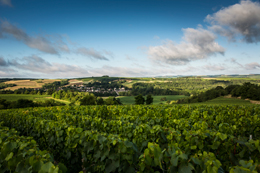 Chablis. (Source: bourgogne-wines.com)