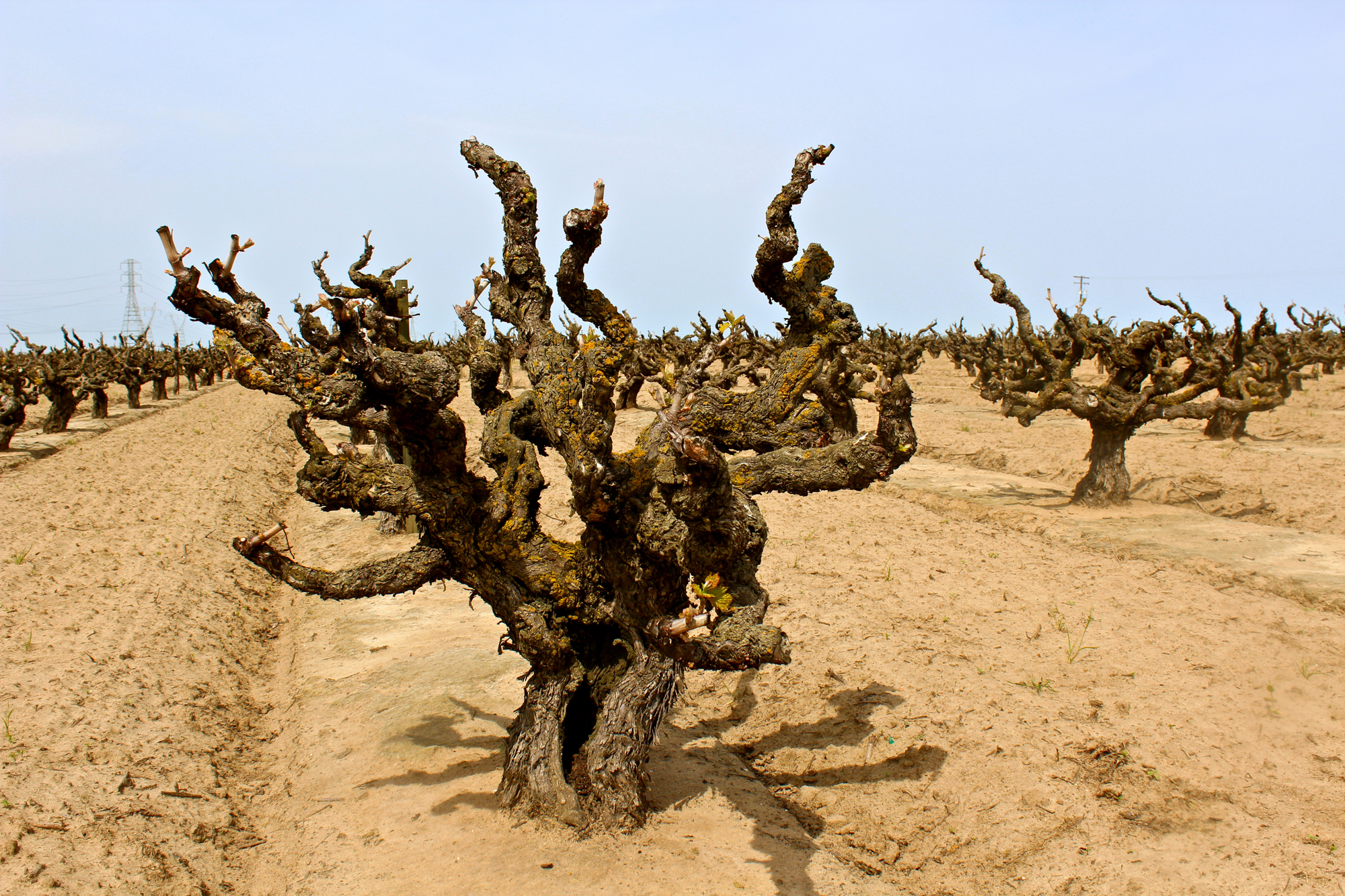 How Soil Affects Flavours In Wine Last Try Wines