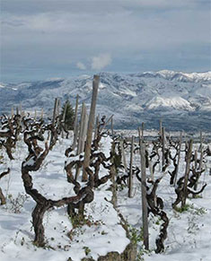Vines on Mount Etna during winter (From Tenuta delle Terre Nere)