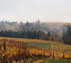 Vineyards in Oregon (Wikimedia)