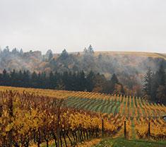 Oregon Vineyards (Wikimedia)