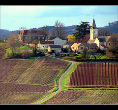 Côte Chalonnaise vineyards (Flickr: Lautergold)