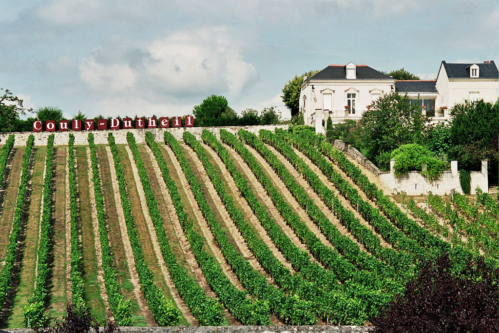Vineyard in the Loire Valley (Wikimedia)