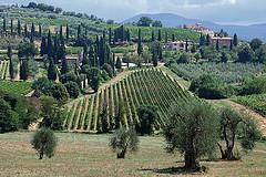 Montalcino landscape (Flickr: Eric@focus)
