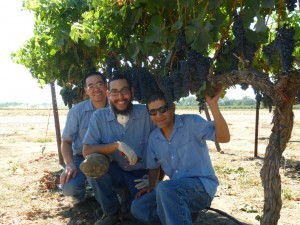 Cistercian monks in vineyards at the Abbey of New Clairvaux in California