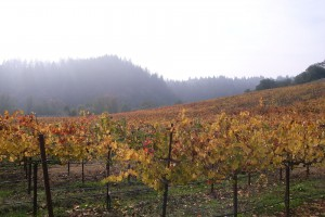 Early morning fog in the Russian River Valley (Wikimedia)