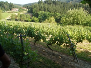 Uriondo vineyard in Zaratamo Spain. Source: De Maison Selections.