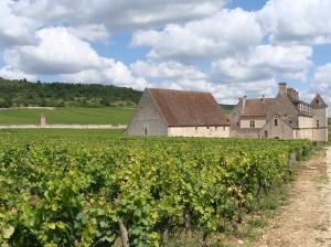 Le clos Vougeot vineyard in Côte-d'Or, Burgundy (Wikimedia)