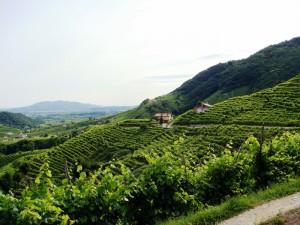 Along the Prosecco Wine Road (Flickr: Lorenzo Benetton alias apolide)