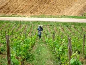 Vineyards in the Aube (Source: Domaine Vouette et Sorbée)