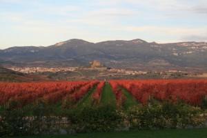 Vineyards in Rioja. (Flickr: thirstforwine)