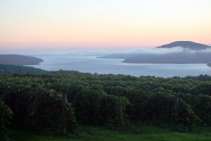 Sunrise overlooking a vineyard in the Finger Lakes. (Wikimedia)
