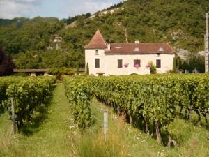 A vineyard in Cahors. (Wikimedia)