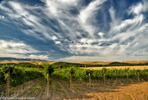 Vineyards in Walla Walla. (Source: Walla Walla Wine)
