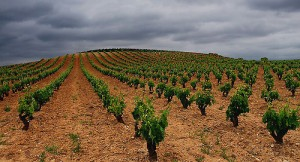 Rioja terroir.
