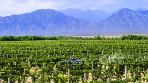 Ningxia wine region in China. (Source: Ningxia Wine Guide)