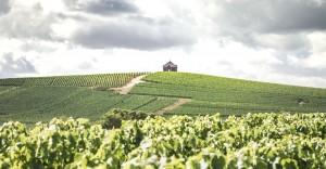 Vineyards at AR Lenoble in Champagne. (Source: AR Lenoble)
