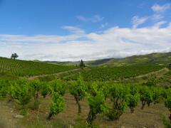 Vineyards in Corbières. (Flickr: www.zogy.net)
