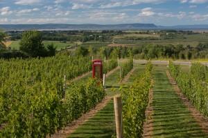 Vineyards in Nova Scotia (Wikimedia)