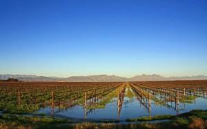 Vineyards in the Swartland. (Source: Santam Swartland Wine and Olive Route)