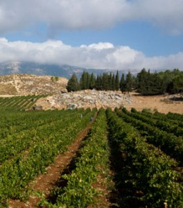 Vineyard in Lebanon. (Source: Wines from Lebanon)