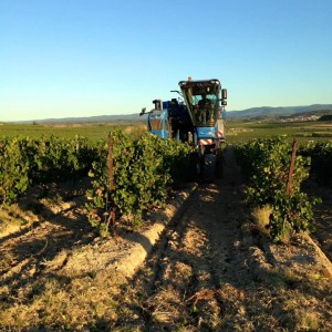 Harvest in Pays d'Oc. (Source: Pays d'Oc IGP Wines)