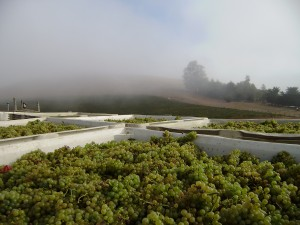 Wind and the fog are the Petaluma Gap's trademark. (Source: Petaluma Gap Winegrowers Alliance)