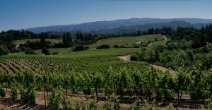 Veeder Peak, Mount Veeder, Napa. (Source: Jackson Family Wines)