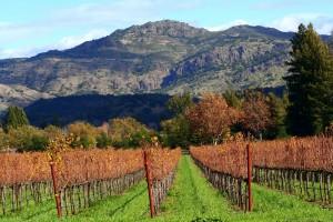 Napa vineyards. (Wikimedia)