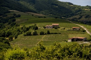 Beaujolais wine country. (Wikimedia)