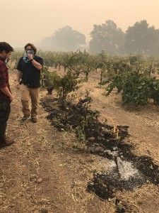 "Posted by Esther Mobley on Twitter: ""1880s vines at Old Hill Ranch in Sonoma Valley. Gone."""