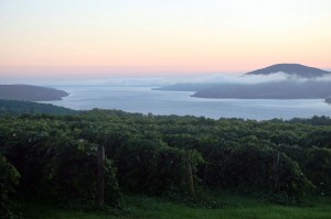 Sunrise overlooking a vineyard on Canandaigua Lake in the Finger Lakes. (Wikimedia)