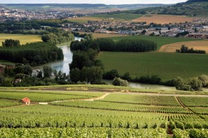 Vineyards in Champagne. (Wikimedia)