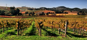 Vineyards in Napa Valley. (Source: Wikimedia)