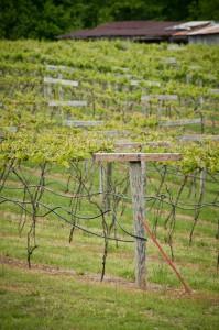 At Cooper Vineyards in Louisa, Virginia. (Flickr: USDAgov)