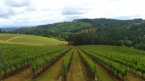 Willamette Valley vineyards. (Wikimedia)