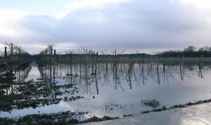 Recent flooding at Jordan Winery. (Photo courtesy of Jordan Winery)