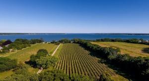 Photo courtesy of Long Island Wine Country