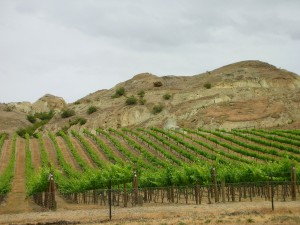 Vineyard in Central Otago. (Source: Wikimedia)