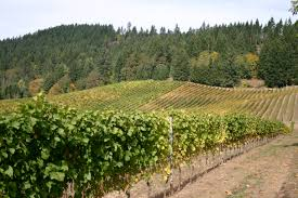 Vineyard in Willamette Valley. (Wikimedia)