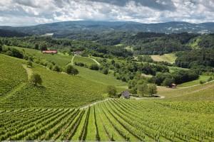 Vineyards in Styria. (Photo credit: Austrian Wine)