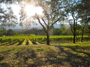 Vineyards in Sonoma. (Flickr: torbakhopper)